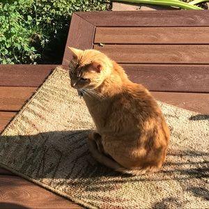 Other - Raja In The Sun Perimeter Monitor